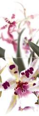 Orchid Р2 панно из 2-х плиток 249 х 728 849руб шт