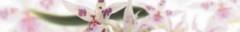 Orchid B364 364 х 62 123руб шт