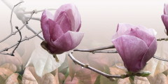 1dekor_magnolija_1_rozovyi500250