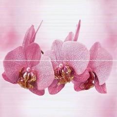 dikaya-orhideya-av